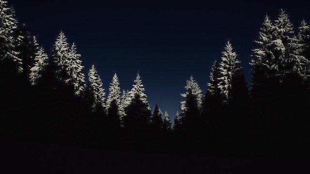 Der er nogle ovre i skoven. Mon det er skov-nisser?